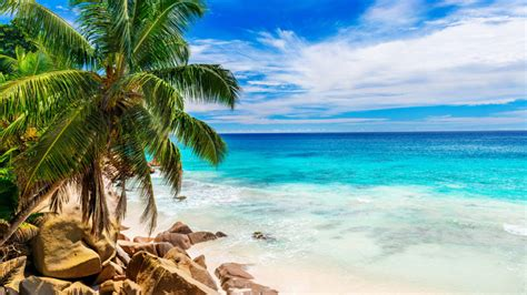 beautiful beach  sand green palm trees sea clear water