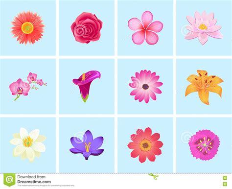 top 28 flat flower designs flat floral design royalty free stock images image 37847329 set