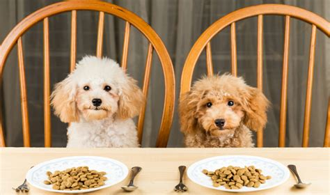 puppy food vs food food pet circle