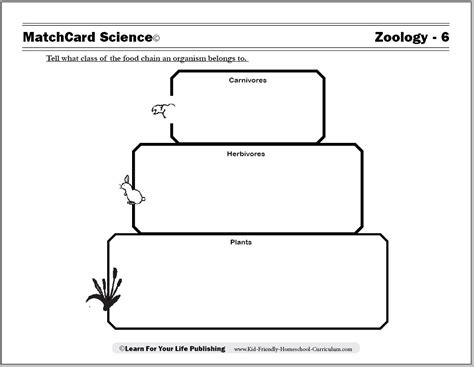 printable zoology worksheets food chain worksheets