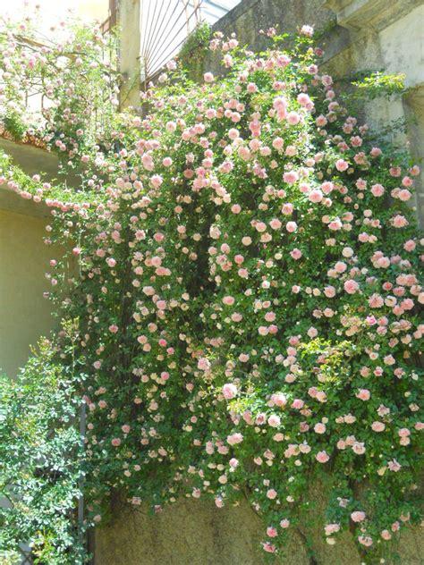 alberi da giardino resistenti al freddo emejing piante da terrazzo resistenti al freddo ideas