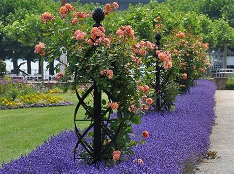 ideas for climbing rose supports different styles for trellis for climbing roses gardens trellis ideas and yards