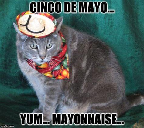 Memes 5 De Mayo - hungry kitten imgflip