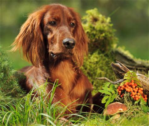 backyard mushrooms dogs why wild mushrooms are dangerous to dogs and cats