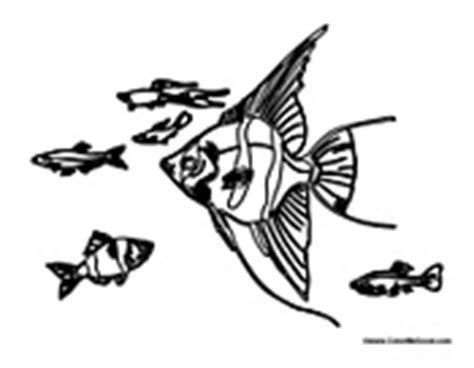 zebrafish coloring page how to draw zebrafish