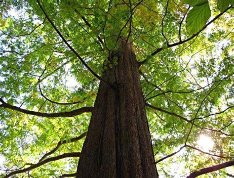 piante da giardino alto fusto migliori alberi alto fusto gli alberi quali sono i
