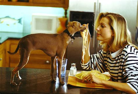 can dogs eat pasta toxic and dangerous foods your should never eat