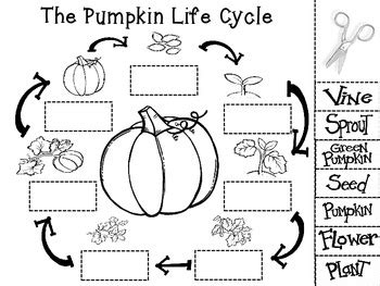 life cycle of a pumpkin coloring page pumpkin life cycle by mrs grooms room teachers pay teachers