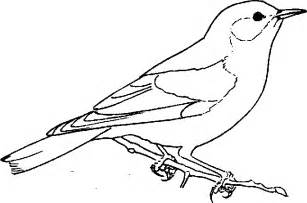 blue bird colouring pages bluebird coloring page animals town animal color