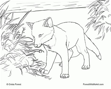 coloring pages difficult animals printable hard coloring page animal coloring home