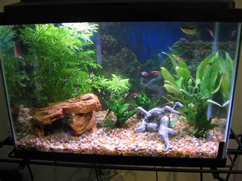 aquarium design for guppies tropical fish tanks page 22