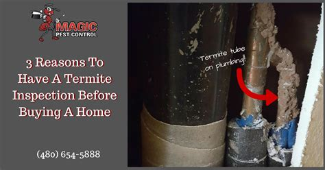 buying a house with termites buying a house with termites 28 images the cost of termite damage cure all pest