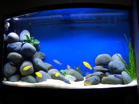 cichlid aquascape 17 best images about freshwater aquariums on pinterest african cichlids cichlids and aquascaping