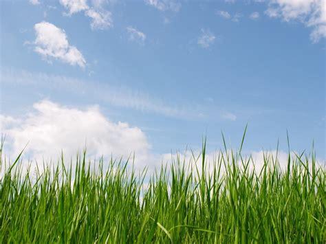grass powerpoint template powerpoint backgrounds grass listmachinepro