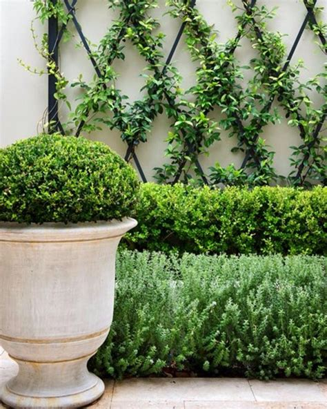 White Metal Garden Trellis Best 25 Metal Trellis Ideas On Metal Garden