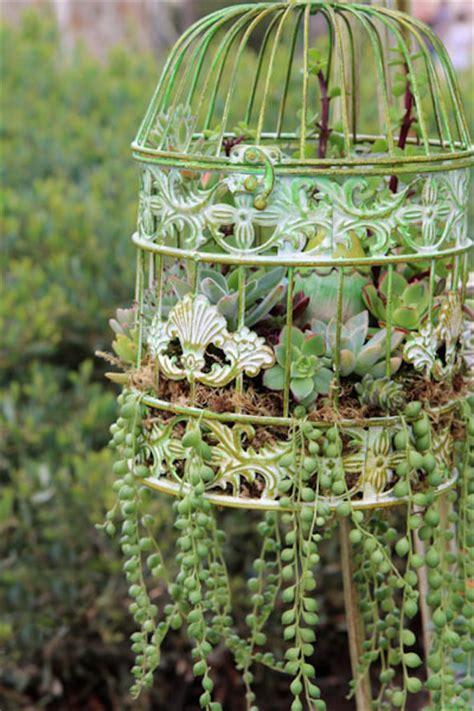 Beginner S Guide To Growing Succulents Garden - how to grow succulents in a birdcage balcony garden web