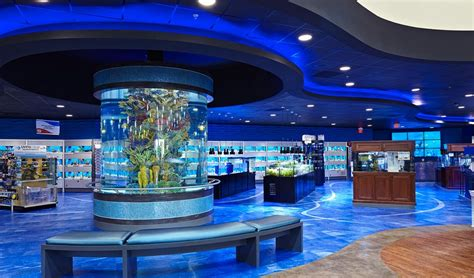 big bear business for sale home warehouse design center cool aquarium pet store interior design visit city
