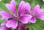 questionario fiori di bach nutrizionista fiori di bach