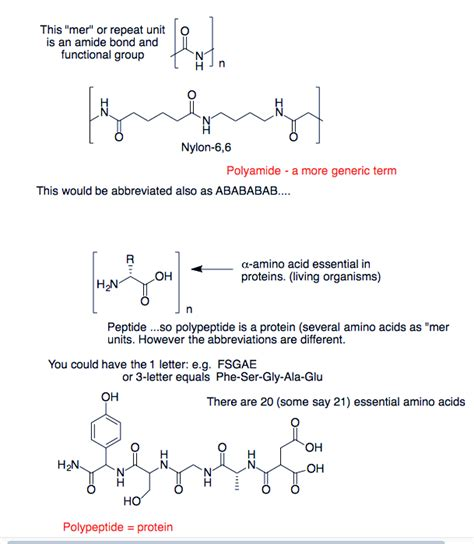 protein vs polypeptide polymers difference between polypeptides and polyamides