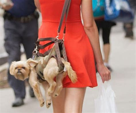 puppy bags purseblog asks do you carry your in your bag purseblog