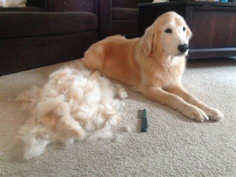 dog bed stuffing stuffing for the dog bed brushybrushy
