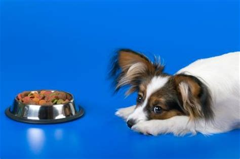 puppy wont eat when your won t eat