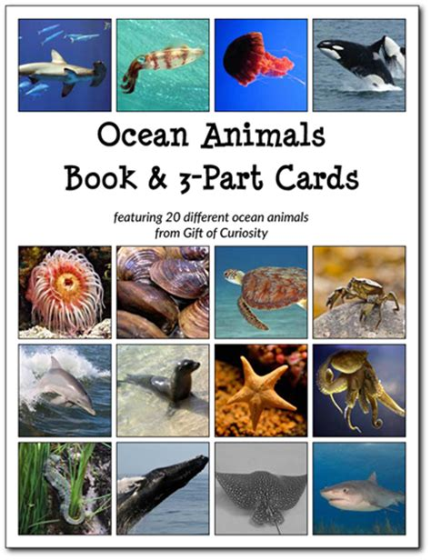printable ocean animal cards relentlessly fun deceptively educational