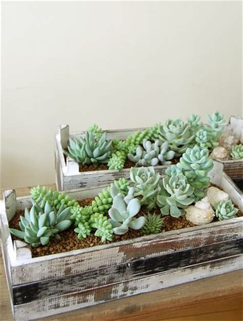 succulents wood planters and planters on pinterest