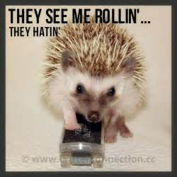 Hedgehog Meme - best 25 hedgehog meme ideas on pinterest baby hedgehog