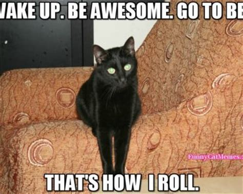 Funny Memes Images - black cat meme funny cat memes