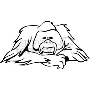 Outline Drawing Orangutan by Top Orangutan Outline Images For Tattoos