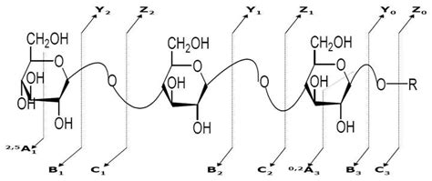 carbohydrates nomenclature nomenclature for the fragmentation of carbohydrates