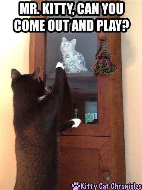 Can Your Come Out To Play by 17 Best Images About Cat Memes On Cats Plays