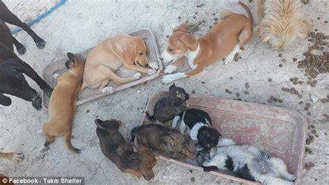 dentist who rescued 200 dogs after crisis hit owners