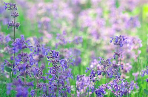 purple flower ideas   garden pots  planters