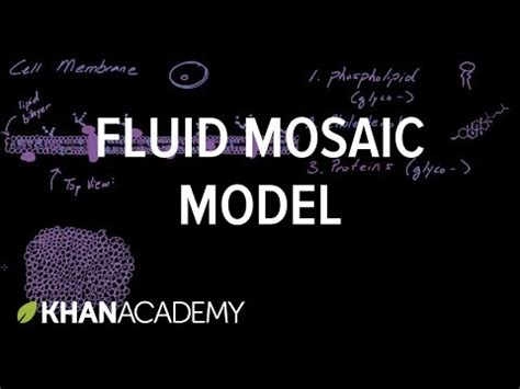 cell membrane overview  fluid mosaic model cells