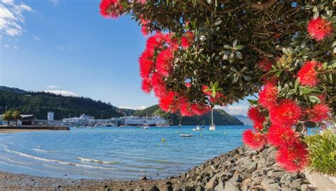 best real christmas tree nz nz ranked best country in the world to retire in newshub