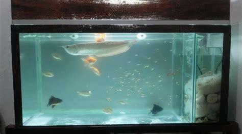 cara membuat filter kolam ikan air tawar filter aquarium yang bagus untuk aquascape ikan hias