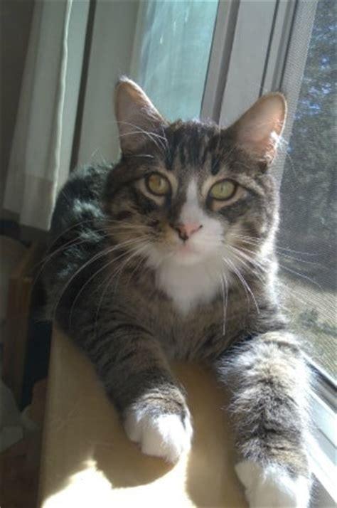 cats  shasta abbey  conscious cat