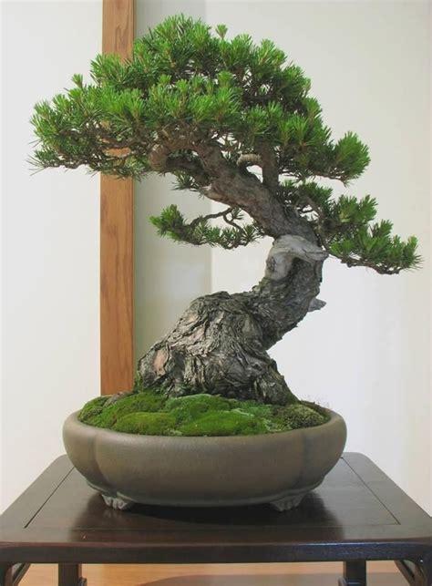 Bonsai Baum Kaufen 38 by How Do You Like This Pretty Tree Bonsaiinspiration