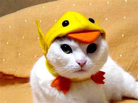 cat in hat cat wallpapers for desktop 2012 world