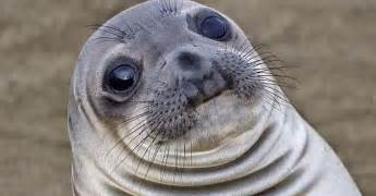 That Deaf Dumb And Blind Kid Awkward Moment Seal Is The Meme For All Your Slippery