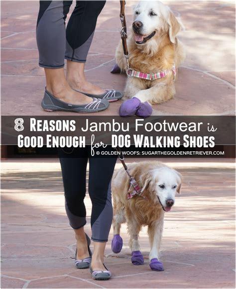 dogs walking in shoes 8 reasons jambufootwear is enough for walking shoes