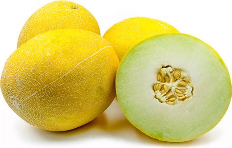 Melon Honeydew Orange 10 Benih galia melon information recipes and facts