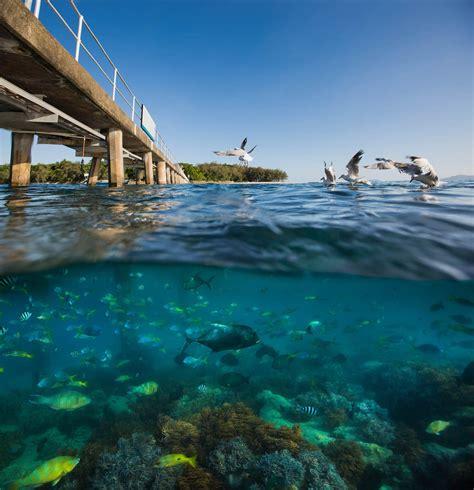 catamaran hire cairns green island great barrier reef tour cairns australia