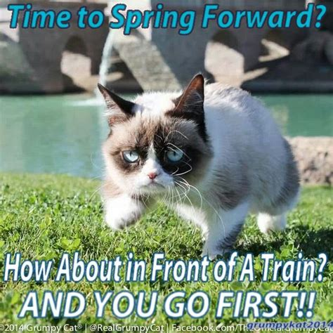 Original Grumpy Cat Meme - 2183 best images about grumpy cat on pinterest gift