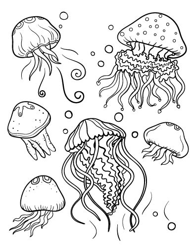 coloring pages of jellyfish coloring pages for kids and