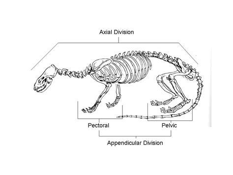 sea otter diagram skeletal anatomy
