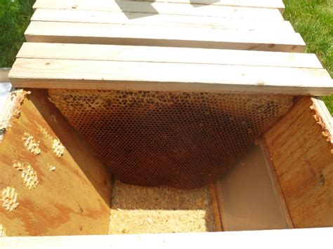 Top Bar Beehive Inside A Top Bar Hive 1 Central Indiana Beekeepers