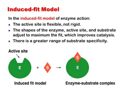 what is the name of the model on the 2014 viagra commercial enzymes enzymes as biological catalysts ppt video online